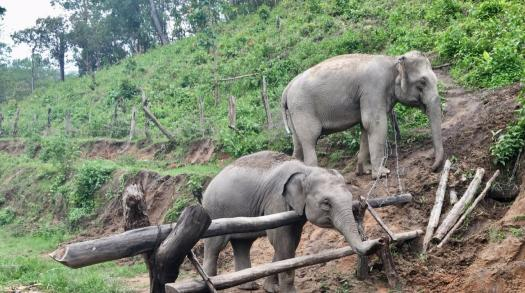 An unforgettable elephant experience in Northern Thailand