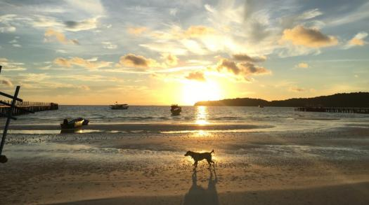 The unique and friendly dogs of Southeast Asia