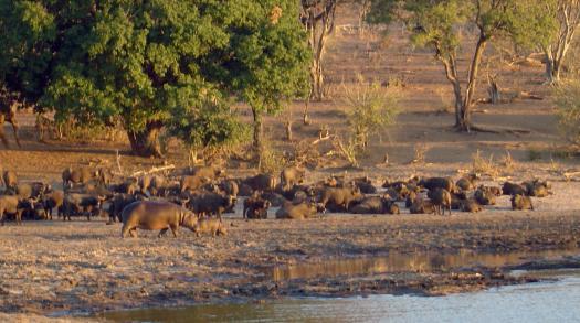 Sleepless in Botswana
