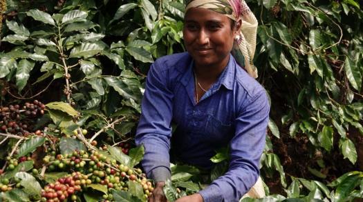 Beanrove Coffee Roastery: India's One Stop Coffee Studio