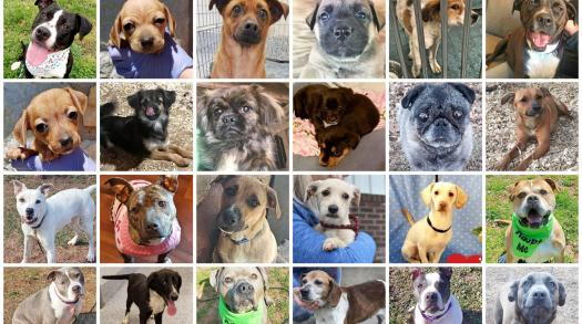 Justice Rescue - a nonprofit, no-kill shelter saving and caring for abused animals