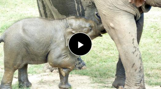 Learn how to protect, respect and care for Thailand's elephants